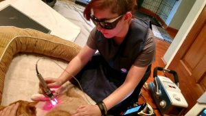 veterinary cold laser therapy