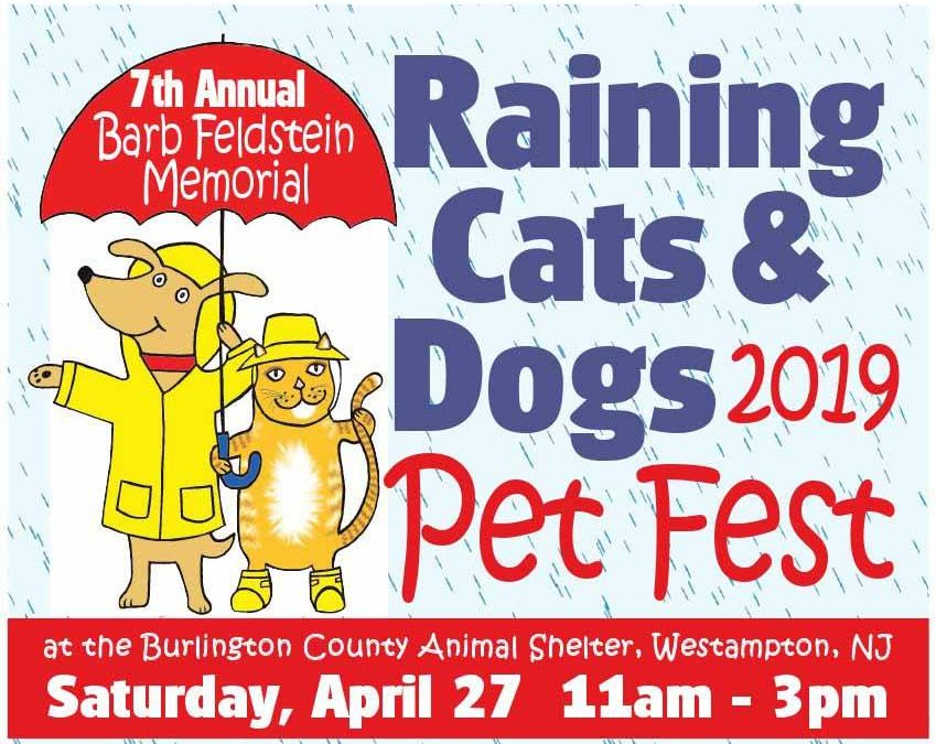 2019 Barb Feldstein Memorial Raining Cats & Dogs Pet Fest!