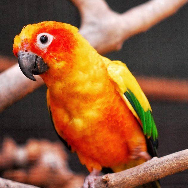 Pet bird.